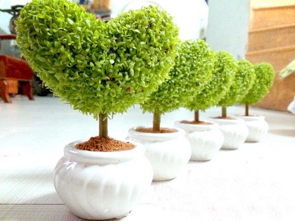 bài toán trồng cây