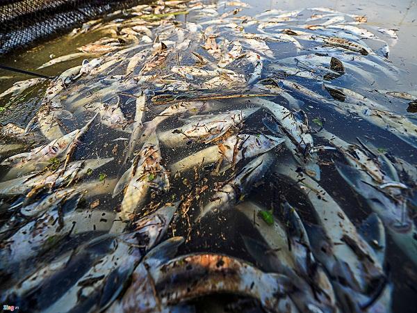 cá chết đuối