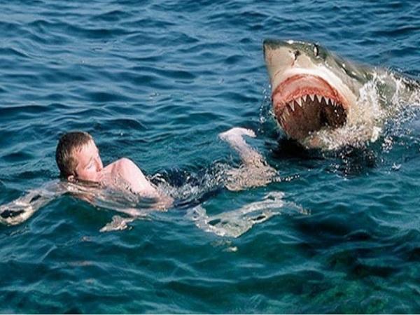 cá mập trong phim