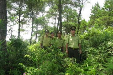 Lý do tại sao phải bảo vệ rừng