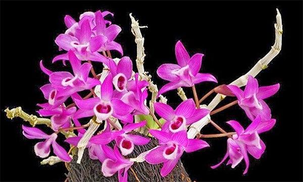 các loại hoa lan rừng
