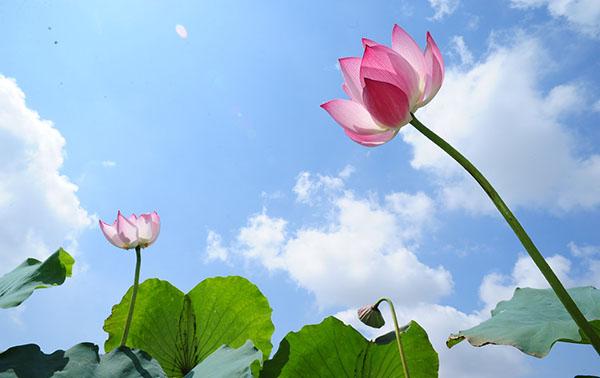 các loài hoa đẹp