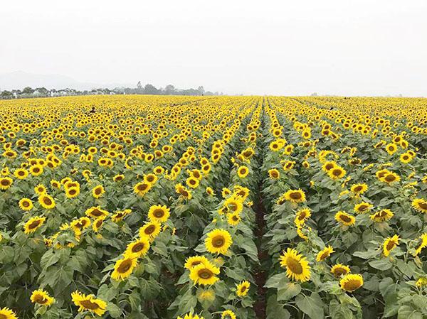 các loài hoa đẹp nhất