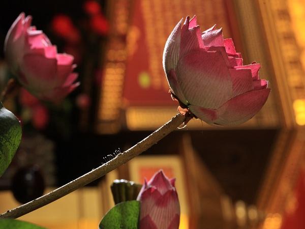 hoa ưu đàm mọc trên hoa sen