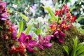 top 9 loai hoa lan dep nhat cho tet nguyen dan 2018
