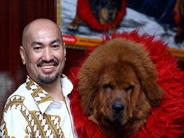 chó ngao là biểu tượng của giới nhà giàu trung quốc