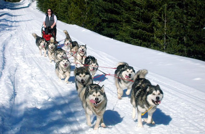 Nguồn gốc chó alaska