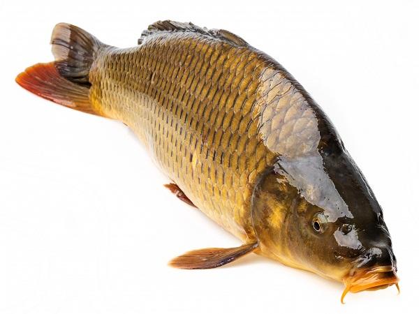 Giải mã giấc mơ thấy cá điềm lành hay dữ