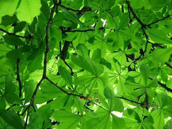 Lý giải tại sao lá cây có màu xanh