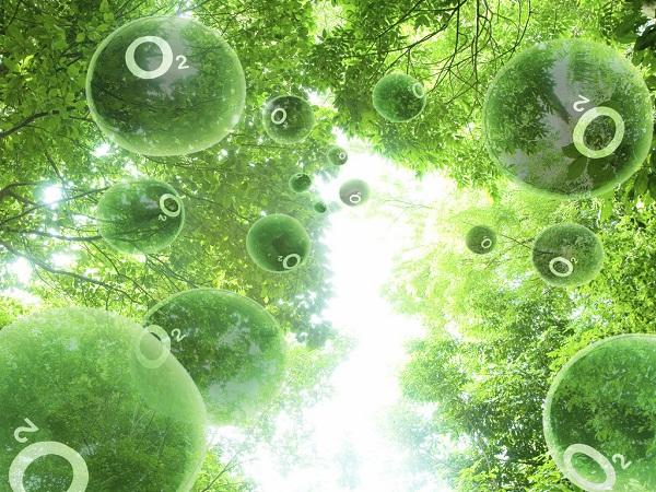 rừng cung cấp oxy
